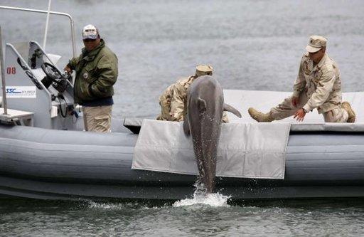 Les dauphins de l'armée américaine remplacés par des robots